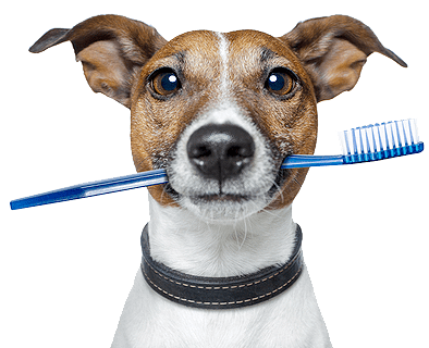 How To Brush Dog Teeth:  Essential For Your Pup's Overall Health