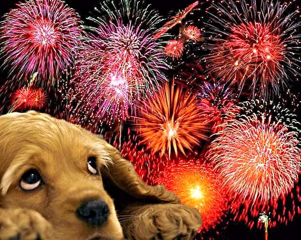 Fireworks & Dogs: 5 Best Tips To Comfort Your Furry Friend