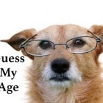 Doggy Years: Chances Are You Miscalculated Your Dog's Age