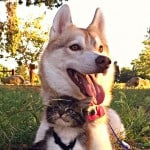 Dog Raising Cat: The Miracle of Rosie and Lilo