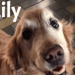 Incredible:  Viral Reaction After Dog Recieves Cancer Results