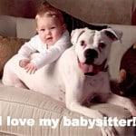 Trust DOGS: The Best Babysitters Around