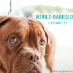 TODAY:  World Rabies Day – The Elimination Goal