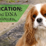 Doggy DNA: Domestication Effects