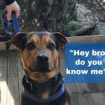Facebook Unites Lost New Zealand Dog With Owner