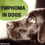 How To Spot Canine Lymphoma Cancer