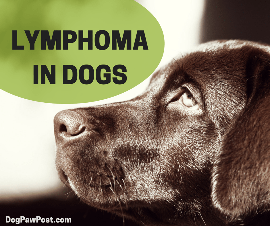 LYMPHOMA IN DOGS