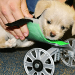 Two-Legged Puppy Now Has 3-D Printed Wheelchair