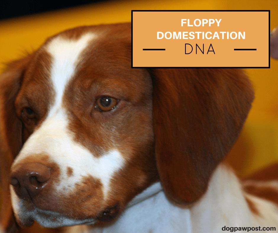 DNA Dog
